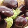 夏の旬野菜『なす』ナスニンが天然の日焼け止めに!アンチエイジングにも効果的です